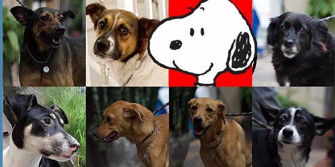 Adoção de cães é tema da campanha do Habib´s